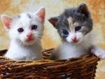 ..Curious Kittens..