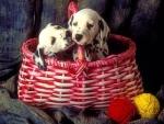 ..Dalmatian Puppies..
