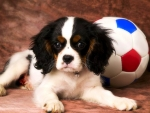 ..Puppy with Football..