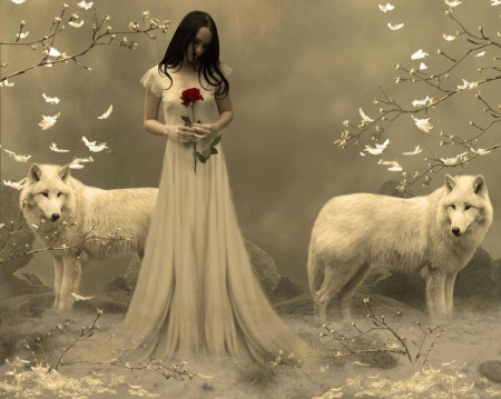 Lost souls... - red, sadness, fantasy land, rose, woman, brunette, alone, fantasy, loneliness, girl, two, single, wolves, white, feathers