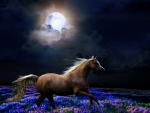 Solitary gallop in the moonlight..