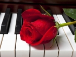 Rose on Piano