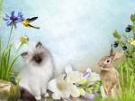 Kitten Hummingbird Bunny