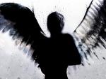 angel_Wallpaper-tamar-1920x1440