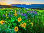 Natural Flower Mix