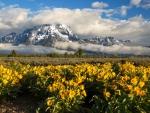 Mount Moran, Grand Teton NP, Wyoming