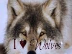 *I ♡ Wolves*
