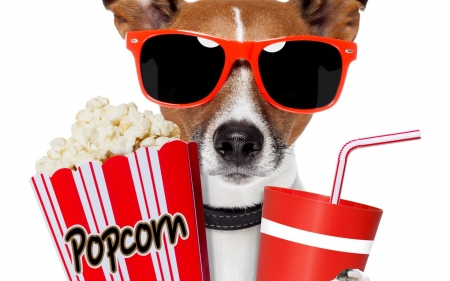Ready for a great movie - popcorn, red, caine, animal, sunglasses, cute, drink, funny, white, puppy, dog