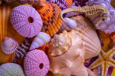 Overlapping Shells - lovely still life, love four seasons, conch, starfish, beaches, seahorse, summer, nature, shells