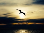 Seabird at Sunset