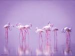 """Flamingo""""s"""