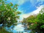 breathing the sky