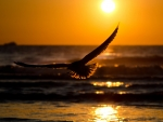Bird at Beach Sunset