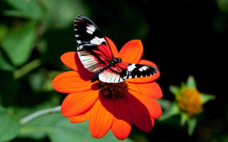 Beautiful Bright Butterfly