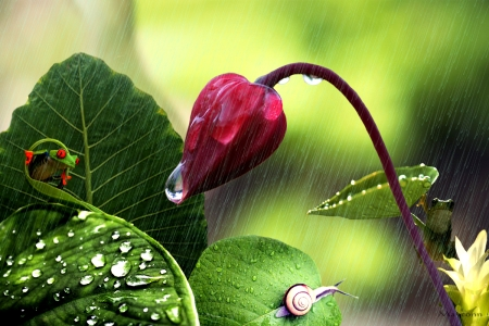 A rainy day - frog, flower, nature, rain, weather