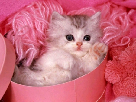 Pretty Kitty In Pink Cats Animals Background Wallpapers