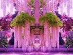 Japanese  Flower Park