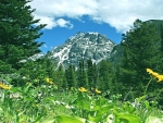 Lovely Meadow Mountain