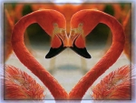 Love of flamingos
