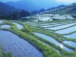 Gorgeous Rice Paddies