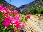 A breath of fresh mountain air