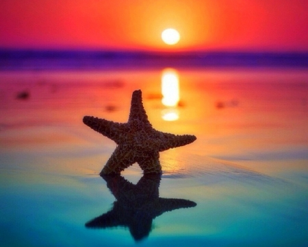 Starfish on the Beach - colorful, dawn, love four seasons, attractions in dreams, creative pre-made, starfish, sea, paradise, beaches, sunsets, summer, nature, sunrise