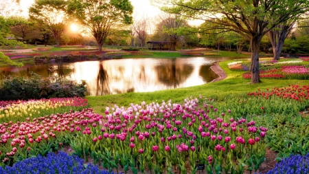 Flower Park Near Tokyo Flowers Nature Background Wallpapers On