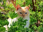 Cat between the leaves