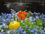 Poppies and Blue Forget-Me-Not