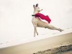 Super Dog