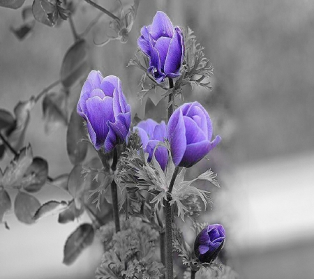 Purple Roses - Other & Abstract Background Wallpapers on ...