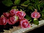 Music n'Roses