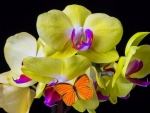 ..Touch Yellow Orchids..