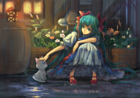 Anime girl and cat - lantern, manga, cat, teddy yang, girl, anime, rain, light, night