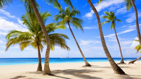 Palm Beach - isle, shore, sun, palm, clouds, sea, palm trees, beach, tropic, SkyPhoenixX1, season, vacation, holiday, ocean, waves, sky, palms, water, paradise, summer, sunshine, island, nature, tropical, coast