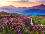 Impressive Nature