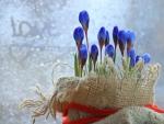 Spring Crocus Flowers ♥