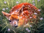 Solitary Fawn