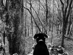 Old Dog in the Woods