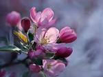 Flowering tree fruit