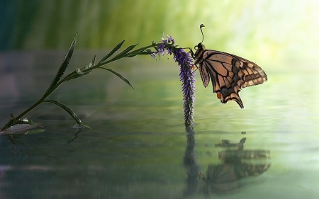 butterfly - water, butterfly, nature, reflection