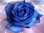 ~*~ Blue Rose ~*~