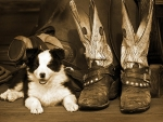 Puppies & Boots