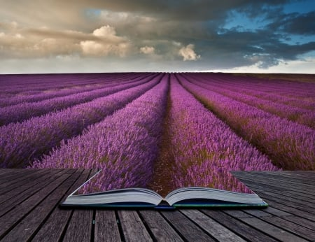 Book of  Lavender