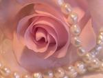 ☆ Pearl Rose ☆