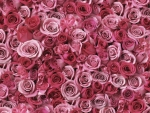 A Scattering of Pink