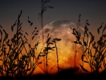 Grassy Moon Sunset