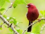 Beautiful Spring Bird