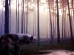 Night of Wolf