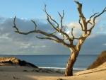 Barren Tree on a Beach